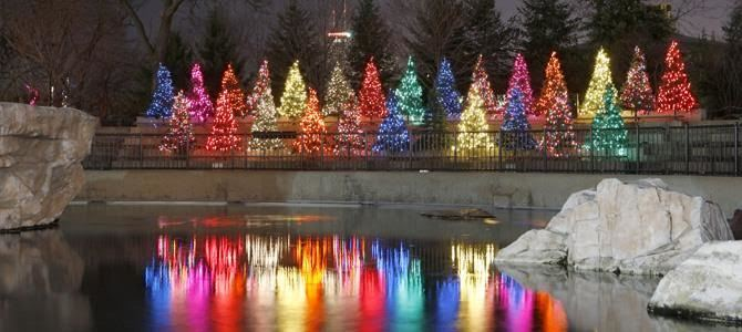 Mancave Goes To Lincoln Park Zoo Lights LGBT Meetup